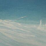 133-Southern Ocean with Albatross.JPG