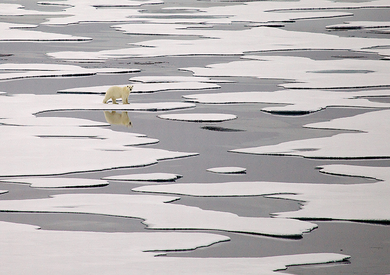 POLAR BEAR ON MELTING ICE: Sony World Photography Awards 2015 (Commended); Germany, Thailand, Hoylake, Serbia, 2015; Argentina, 2016; Australia, 2017