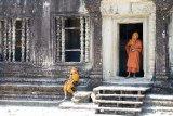 Monks-in-Orange