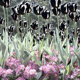 Solarised flowers 2