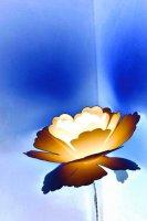 Shades of petal - blue