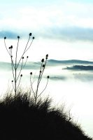 Thistles on the hill 1