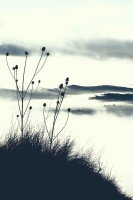 Thistles on the hill 3