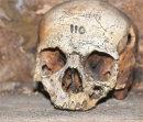 Skull Number 110