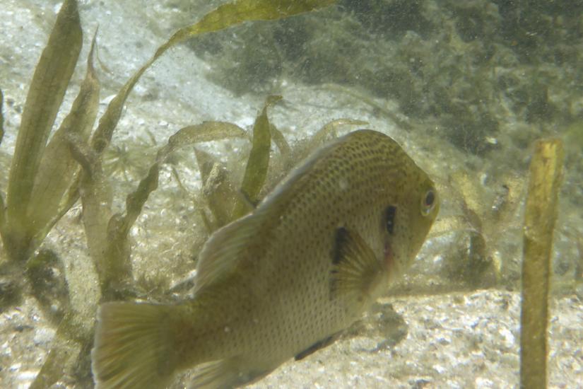 Following a Fish