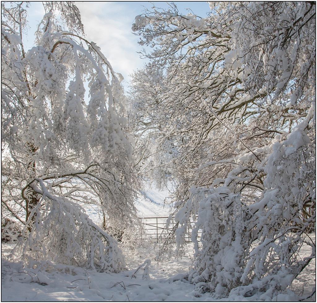 Snow Burden