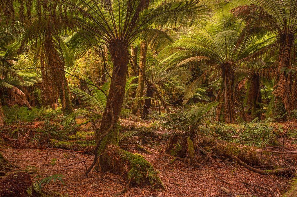 Temporate Rainforest