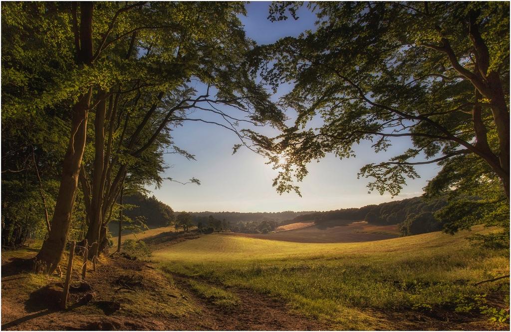 Hascombe Hill