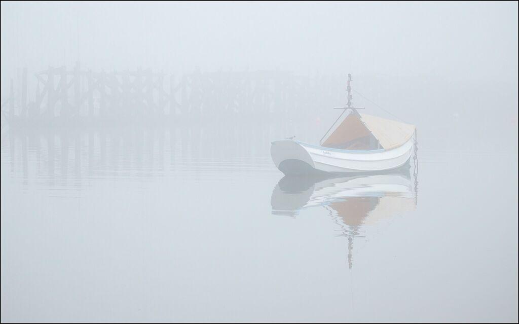 Coble, Arctic Tern, Fog