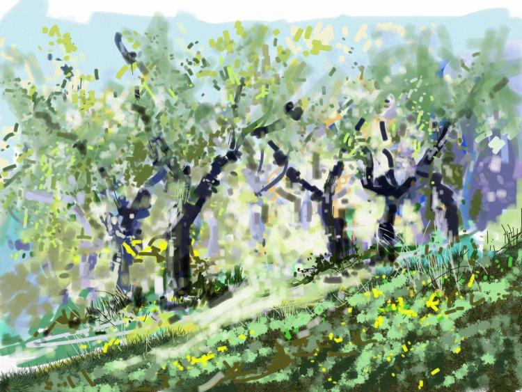 Through the Olive Grove, Fiano Di Pescaglia, Italy