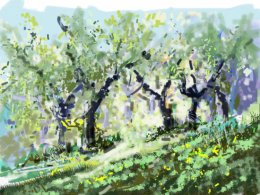 Through the Olive Grove, Fiano Di Pescaglia, Italy