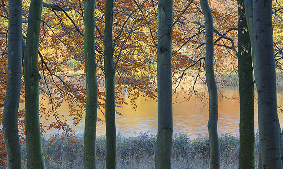 Autumn at Blickling