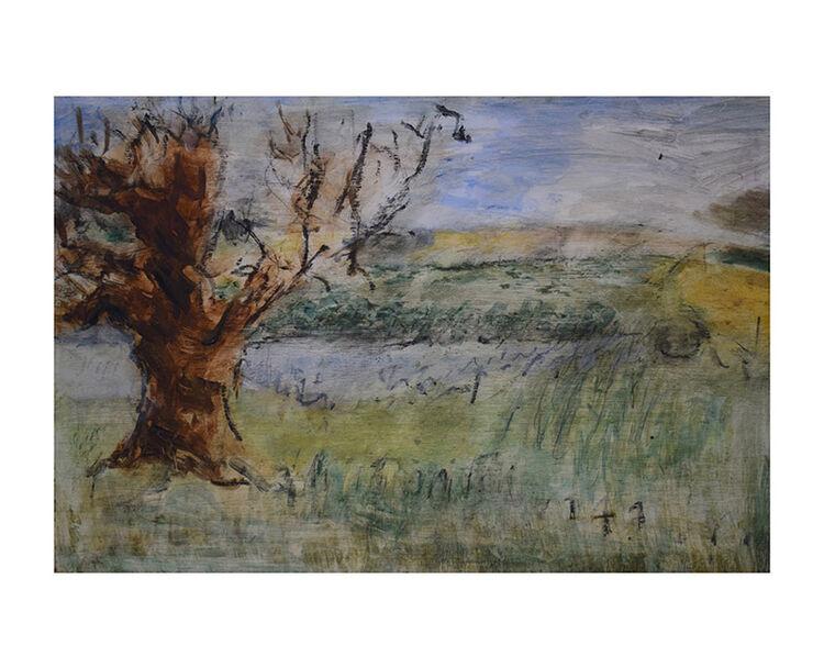 Willow on the Arun