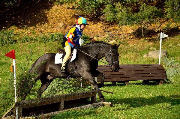 Horse 046