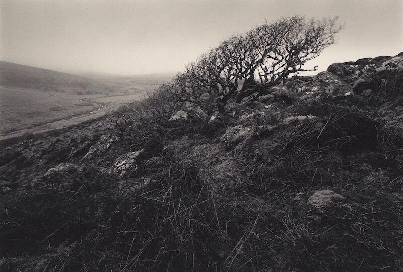 0045 landscape