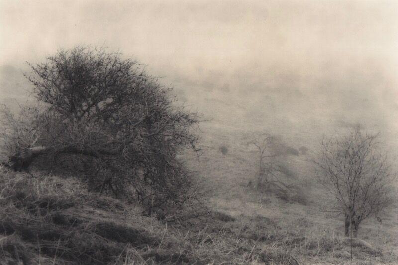 0049 landscape