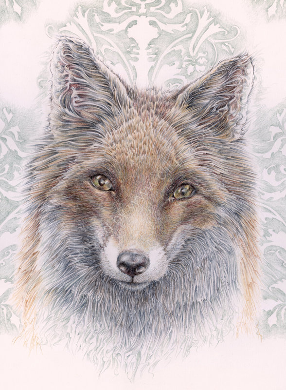 Baroque Fox - coloured pencil