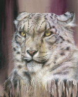 The Vanishing Cat - £485 - colour pencil on pastelmat