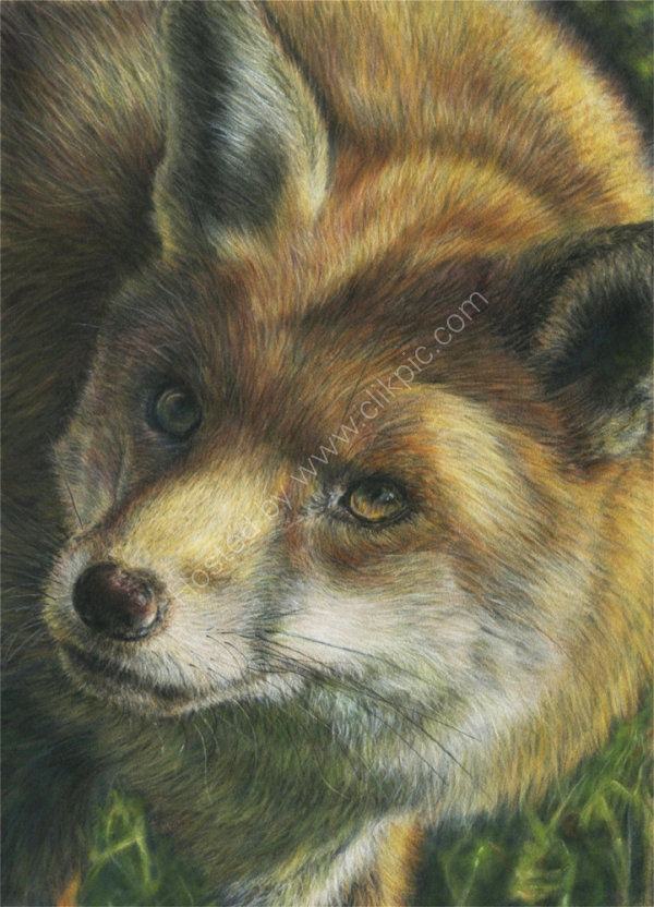 Curious Fox - pastel