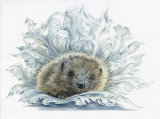 Medieval Hedgepig - £285 - pure colour pencil