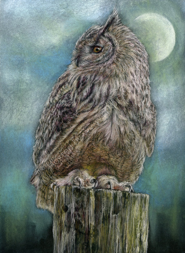 Twilight: Snowy Owl - pastel