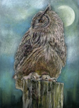 Twilight: Snowy Owl - £325 - pastel on paper