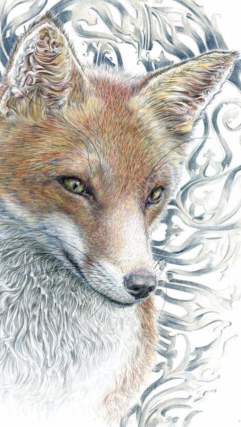 Gothic Fox - coloured pencil