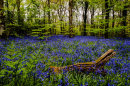 BLUEBELL WOODS - 1 Day Photography Workshop - MAY 2018