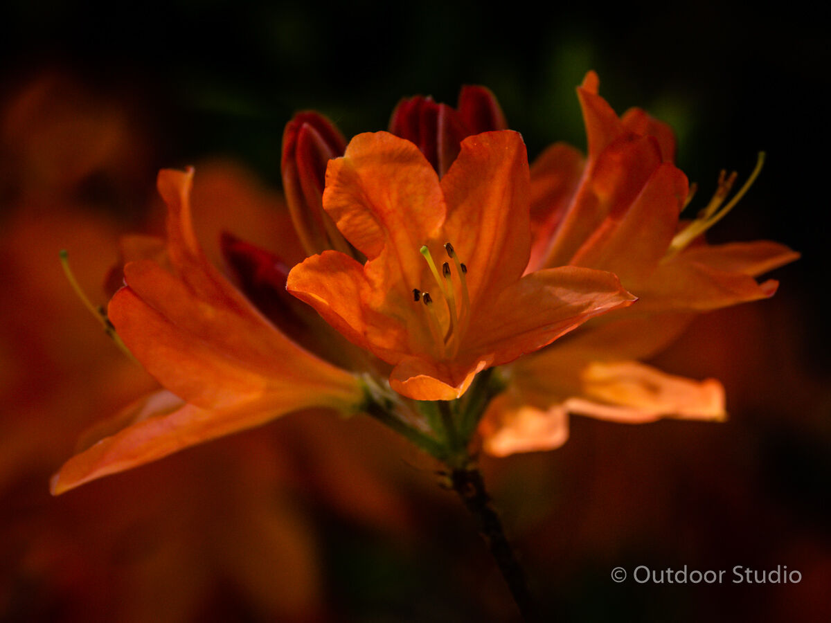 NATIONAL BOTANIC GARDENS - 3 Day Photography Workshop - NOVEMBER 2019