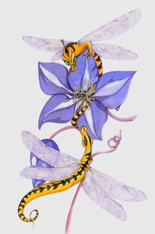 Clematis Dragonfly