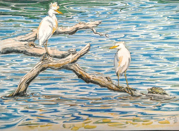 Cattle Egrets and Cistude