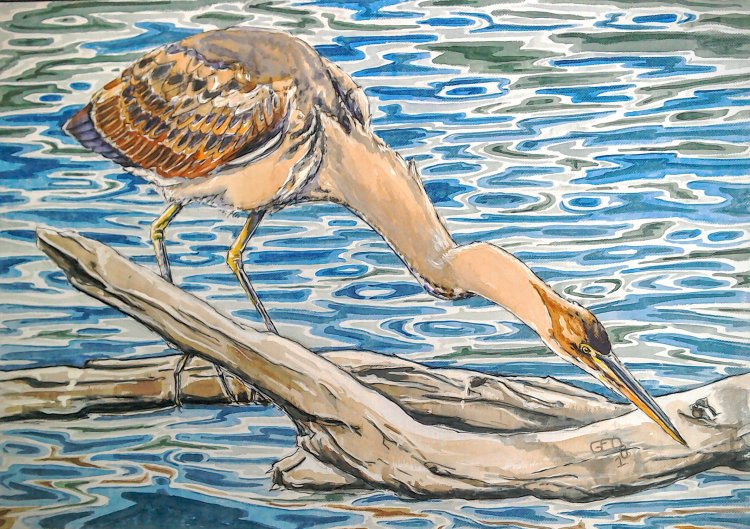 Young Purple Heron, Le Brenne