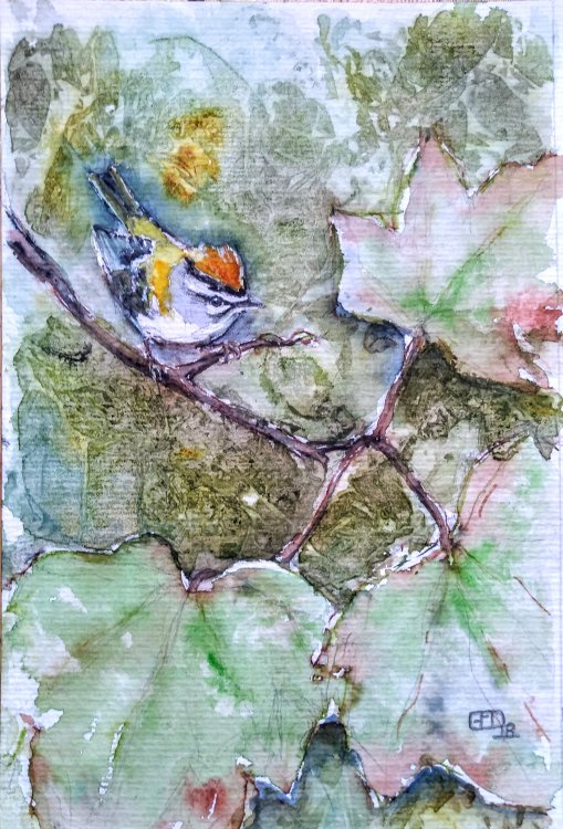 Firecrest in Sycamore