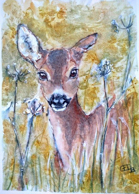 A roe deer doe looking through cow parsley