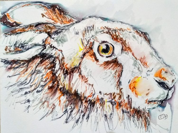 Brown hare in pen and watercolour