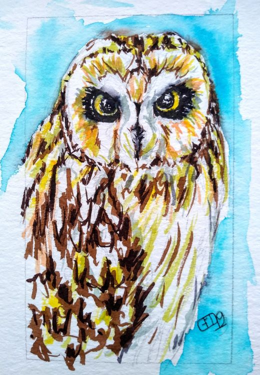 Short eared owl in pen and watercolour