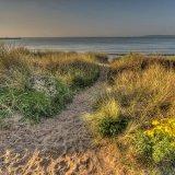 Swansea Dune SA1