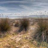 Salt Marsh, Whiteford