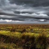 Salt Marsh, Llanrhidian