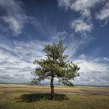 Lone Pine, Whiteford