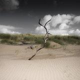 Dune Sculpture, Jersey Marine