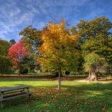 Autumn Colours, Clyne Gardens