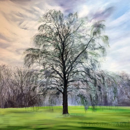 Willow Oil on Canvas 70x70cm £1200