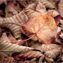 03 Tracey Small Autumn Highly Commended