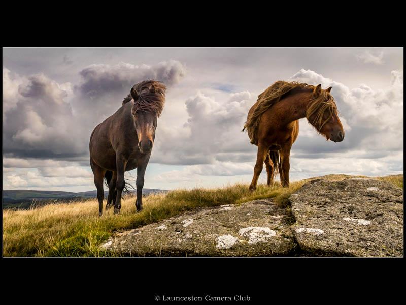 04 Dartmoor Ponies Geoff Trevarthen Highly Commended
