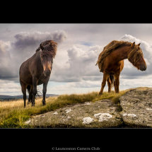 04 Dartmoor Ponies Geoff Trevarthen Highly Commended