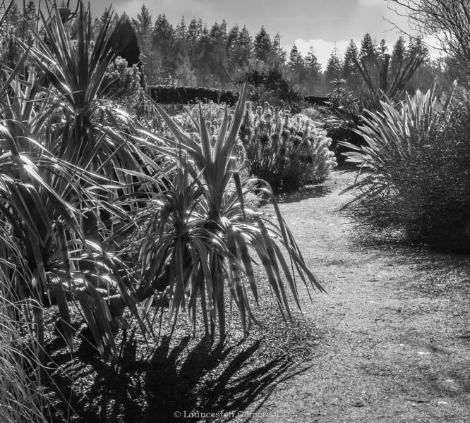 05 Hilary Phillips The Gardeners Garden, Rosemoor