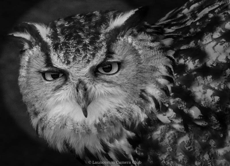07 Mike Pettett Eagle Owl Highly Commended