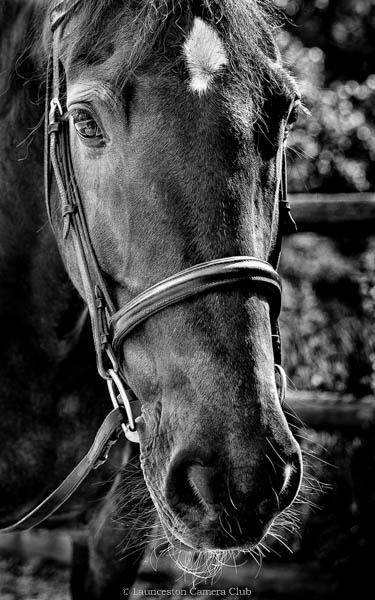 181-Black Shadow-Geoff Trevarthen-Launceston CC wb