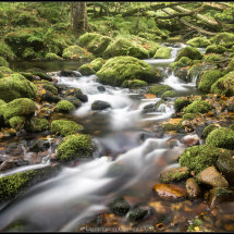 21 Dartmoor Stream Geoff Trevarthen Commended